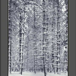 "Amanti Art - ""Pine Forest in the Snow, Yosemite National Park"" Framed Print by Ansel Adams - No one captured the splendor of nature quite like the late, great Ansel Adams.  Here, a forest of snow-laden boughs makes a breathtaking black and white statement in your decor."