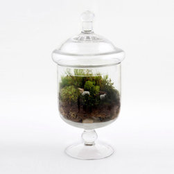 Graze in the Crystal Jar Terrarium - Gaze into the crystal jar and see the future of the sheep who lull you to sleep every night�ۡ����a lush, green meadow constantly replenishing itself, and other happy, wandering animals too. This glass apothecary jar, handmade in Brooklyn, may not predict your future, but it is a lovely, whimsical addition to your desk or bedside table�ۡ����a world to gaze into as you fall asleep!