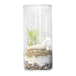Makers Kit - Cylinder Vase Air Plant Terrarium - Fun to make and easy to care for