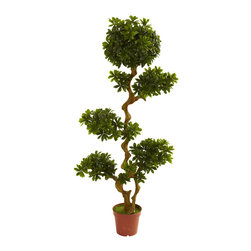 Nearly Natural - 5' Pittispourm UV Resistant (Indoor/Outdoor) - Here's one of the more unusual and striking decorating options you'll come across. This Pittispourm tree stands a robust five feet in height, it's trunks bending and twisting upward, with several areas of leafy bloom that draw the eye and ignite curiosity. This is an ideal home or office decoration, and is fully UV resistant, so you can put it indoors or out. Makes a fine gift as well.