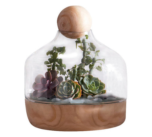 Copenhagen Terrarium, Wide - One of the hottest trends that never goes out of style are terrariums. Perfect for either objects of art, succulents or air plants, the Copenhagen Wide Terrarium has a chic appeal with its mouth blown glass vessel and Paulownia Wood base that is versatile and can be seamlessly integrated into a guest room or living room of various styling. Topped with a wooden sphere to finish the look, this terrarium, with its clean lines and natural components, is suitable and breathtaking in any setting.