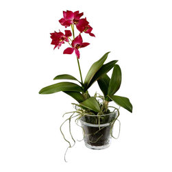 Jane Seymour Botanicals - Dendrobium Orchid in Glass Pot, Fuchsia - Give your room a pleasing focal point of fuchsia faux flowers with this mini dendrobium orchid. This gorgeous arrangement comes in a modern glass pot, and can be placed anywhere in your home — no water or sunlight needed!