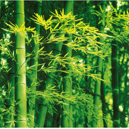 Bamboo In Spring Wall Mural - Lively green bamboo plants are the focus of this single panel wall mural.