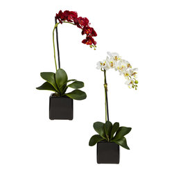 Nearly Natural - Phaleanopsis Orchid w/Black Vase Silk Arrangement (Set of 2) - Elegant and understated, this beautiful Phalaenopsis is certain to be a lovely fixture for even the most refined of environments.  With its delicate blossoms cascading over each other in a streak of pure color, the smooth and rounded leaves, and the sharp, minimalist black vase that houses and defines the arrangement's color, this is a fantastic centerpiece for either the home or office.