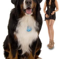 Pet Care Puppy Tweets