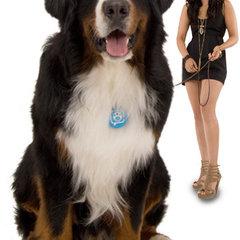 pet accessories Puppy Tweets