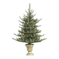 Vickerman 5 ft. Potted Colorado Blue Pre-Lit Christmas Tree - Bring the beauty of Colorado's many pine forests to your home this holiday season with the Vickerman 5 ft. Potted Colorado Blue Pre-Lit Christmas Tree. Beautifully lit with 250 lights, this elegant tree is an ideal choice for your home or office. Specifications for 5-Foot Potted Colorado Blue Pre-lit Tree Shape: Medium Base Width: 44 inches Number of Bulbs: 250 Number of Tips: 373 Don't Forget to Fluff!Simply start at the top and work in a spiral motion down the tree. For best results, you'll want to start from the inside and work out, making sure to touch every branch, positioning them up and down in a variety of ways, checking for any open spaces as you go.As you work your way down, the spiral motion will ensure that you won't have any gaps. And by touching every branch you'll create the desired full, natural look. About VickermanThis product is proudly made by Vickerman; a leader in high quality holiday decor. Founded in 1940; the Vickerman Company has established itself as an innovative company dedicated to exceeding the expectations of their customers. With a wide variety of remarkably realistic looking foliage; greenery and beautiful trees; Vickerman is a name you can trust for helping you create beloved holiday memories year after year.