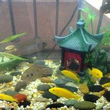 Customer Image Gallery for Petco Asian Gazebo Aquatic Decor