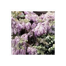 Vines - List of Vine Types. Plant Encyclopedia - BHG.com