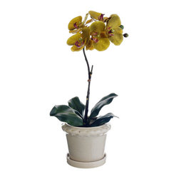 Silk Plants Direct - Silk Plants Direct Phalaenopsis Orchid Plant (Pack of 8) - Olive Green - Pack of 8. Silk Plants Direct specializes in manufacturing, design and supply of the most life-like, premium quality artificial plants, trees, flowers, arrangements, topiaries and containers for home, office and commercial use. Our Phalaenopsis Orchid Plant includes the following: