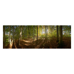 Murals Your Way - 'Long Shadows' Wall Art - In this panoramic view of a forest, oblique rays of sunshine spill through the trees, creating long shadows on the leaf-strewn ground.