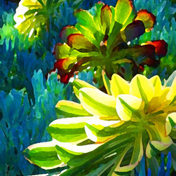 Three Succulents on Blue - In the morning the sunlight illuminates the Aeonium succulents that are growing in a bed of blue senecio. The warm colors glow on the cool blue. I create my digital art in Photo Shop from my photographs. When viewed indoors, the art glows and illuminates the space. Digital Art Prints available on paper, canvas, waterproof metal and acrylic. Different sizes, proportions and panels available upon request. Print prices start at $18.00.