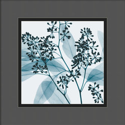 Amanti Art - Eucalyptus II Framed Print by Steven N. Meyers - Photographer Steven Meyers uses X-rays to produce his remarkable images of plant life. The timeless beauty of nature, seen through a modern perspective, makes a striking statement in your decor.
