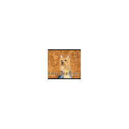Caroline's Treasures - Silky Terrier Wipe Your Paws Indoor or Outdoor Mat 18 x 27 Lh9445Mat - Silky Terrier Wipe your Paws Indoor or Outdoor Mat 18x27 LH9445MAT Indoor/ Outdoor Floor Mat 18 inch by 27 inch Action Back Felt Floor Mat / Carpet / Rug that is Made and Printed in the USA. A Black binding tape is sewn around the mat for durability and to nicely frame the artwork. The mat has been permanently dyed for moderate traffic and can be placed inside or out (only under a covered space). Durable and fade resistant. The back of the mat is rubber backed to keep the mat from slipping on a smooth floor. Wash with soap and water.