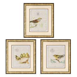 Paragon Art - Paragon Birds on Document I ,Set of 3- Artwork - Birds on Document I ,Set of 3  ,  Paragon Exclusive Giclee     Artist is Burney , Paragon has some of the finest designers in the home accessory industry. From industry veterans with an intimate knowledge of design, to new talent with an eye for the cutting edge, Paragon is poised to elevate wall decor to a new level of style.