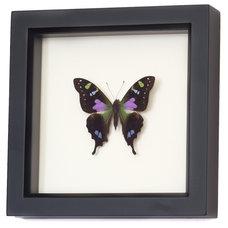 Contemporary Home Decor by Bug Under Glass