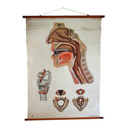 Anatomical Poster - This was originally a German educational poster published by the Deutsches Hygiene-Museum Dresden and sold by an educational bookstore called Bossaerts & Zoon in Antwerp, Belgium.