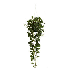Nearly Natural - Philodendron Hanging Basket Silk Plant - This amazing philodendron hanging basket speaks for itself. This silk plant features 264 meticulously shaped green leaves with vines hanging 30 inches below the bottom of the basket.  From the top hook to the bottom of the vines the plants measures a strong 44 inches.  Perfect for home or office this silk hanging basket is a must have.