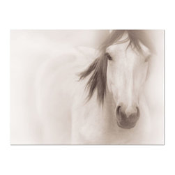 Studio D&K - Large Wall Art  • Horse Photography • Black and White Photography, 20x30 - Black and White Horse Photography Featuring a Young Stallion Named Lightning
