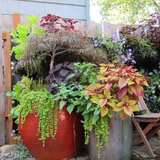 Eclectic Landscape by Becky Bourdeau @ Potted