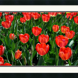 Amanti Art - Tulips Tulips Framed Print by Andy Magee - A field of tulips greets the spring with warm and bright color; this fine art photo print would make a welcome addition to the wall of a flower enthusiast's office or home.