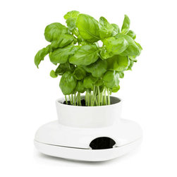 Large Herb Pot - Create a lush indoor garden with elegant design. This ceramic pot is perfect for a large herb plant, and includes a side opening to easily fill the design's reservoir. Save time, as water stored in the reservoir will continually nurture the plant!