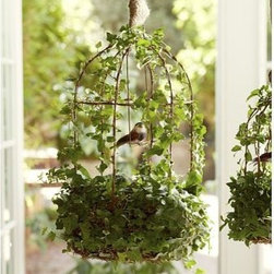 """Live 19"""" Bird Cage Ivy Topiary - Carefully weathered for the look of a charming antique, this sculptural metal birdcage is adorned with lush vines of climbing ivy. Small: 8"""" diameter, 12"""" high Large: 9"""" diameter, 19"""" high Birdcage is crafted with a wire frame and rusted for a vintage look. Includes moss."""