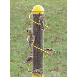 Songbird Essentials - 17 Inch Yellow Spiral Finch Tube - 17.5 in. Yellow Thistle spiral feeder. Consumers and birds love patented songbird essentials bird quest spiral feeders. More ports means more birds. Birds love to run the spiral instead of flying to another perch. Lifetime warranty on workmanship.