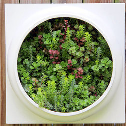 Living Wall Planter Comes Preplanted by Twisted Metals - Wow! I love the choice of succulents in this picture. I've never seen a wall hanging quite like this one, and it would be a great statement piece. I imagine a trio of these hanging on a gray wall.