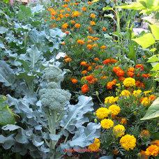 by Urban Artichoke Fine Gardening and Design