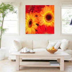 Orarange and Red Gerber Daisies - Add a splash of color with this colorful bold print of brightly orange and red gerber dasies. My digital art is created in Photo Shop from my photographs, then manipulated and painted in Photo Shop. Digital Art Prints available on paper, canvas, metal and acrylic. Different sizes, proportions and panels available upon request. Print prices start at $18.00.