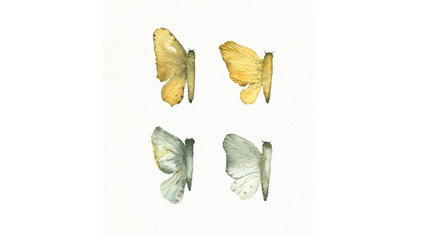 Butterfly Wings Gold teal grey archival print of by amberalexander