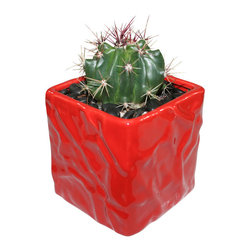"MODgreen - Ferocactus p. - 4"" Ceramic Potted Cactus and Succulents - This little gem is known as 'Mexican Fire Barrel' and will provide a very modern look. With this design MODgreen has put a new twist to the standard ceramic cube planter by giving them a corrugated texture that make these beautiful pots stand out above the rest."