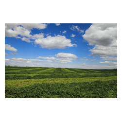 Murals Your Way - Wendell Farm Landscape Wall Art - Photographed by Art Hale, the Wendell Farm Landscape wall mural from Murals Your Way will add a distinctive touch to any room