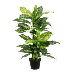 Silk Plants Direct - Silk Plants Direct Dieffenbachia Plant (Pack of 4) - Pack of 4. Silk Plants Direct specializes in manufacturing, design and supply of the most life-like, premium quality artificial plants, trees, flowers, arrangements, topiaries and containers for home, office and commercial use. Our Dieffenbachia Plant includes the following: