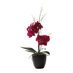 Winward Designs - Phalaenopsis Orchid In Pot Flower Arrangement - The refined beauty of a blooming orchid is universally loved, but not everyone has the patience to care for these hot-house flowers. Treat yourself or a loved one to a permanent version that will delight the senses for years to come. Place one of these on your desk or mantel for an effortlessly chic look.
