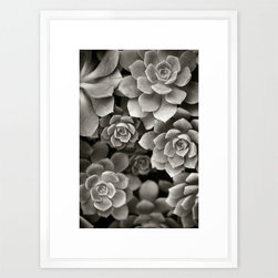 Sprouting Succulents Art Print - In classic black and white, these succulents add their geometric beauty to your wall. They're thirsty, but they don't mind.