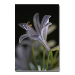 Agapanthus - Canvas, 48x36x3 - Beautiful plant. Soft colors. Macro lens. Nature is always the best designer.