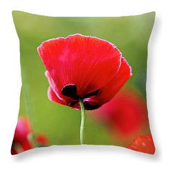 Brilliant Red Poppy Flower Decorative Throw Pillow - © Rona Black. http://www.ronablack.com.