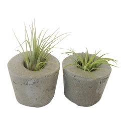 Anson Design CO - Concrete Air Plant - Eco-Friendly Party Favors - Set of 5, Natural, Round - These adorable concrete air plant holders are the perfect party favor or thank you gift for your friends and family. Each one is handmade and holds an air plant that is included in the price!! The concrete is a sustainable alternative to other favors and the air plants are extremely low maintenance.