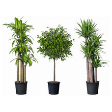 Modern Plants by IKEA