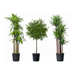 TROPISK Potted plant - Potted plant, tropical plant, assorted species plants