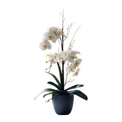 Phalaenopsis Orchid In Pot Flower Arrangement