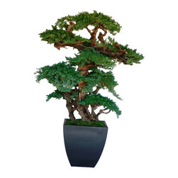 6 ft. Kage Bonsai - The Kage Bonsai stands 6ft tall..  Its name, meaning 'shade', emphasizes its enormous size and strong presence.