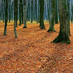 Magic Murals - Autumn Forest Floor Panorama Wall Mural -- Self-Adhesive Wallpaper by MagicMural - Imagine yourself taking a walk through the crumpled leaves on this forest floor after all of the Fall foliage has fallen off the birch and beech trees.  The crunching sounds of Autumn in the woods.