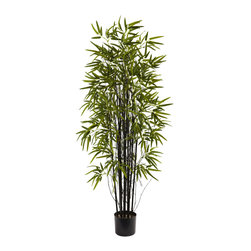 Nearly Natural - 5-Foot Black Bamboo Tree - The black bamboo (also called Phyllostachy nigra bamboo) is known for its jet black trunks,and bold green leaves. And this astonishing reproduction captures the handsome elegance of the black bamboo,and offers it up for your decorating pleasure.