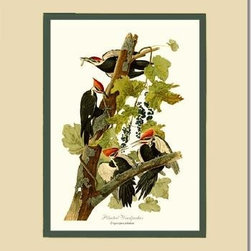Pileated Woodpecker Bird Print - 11x14 Print - 16x20 Cream/Green Mat - Antique bird prints from turn of the 19th century illustrations by reknowned artist James Audubon, Louis Agassiz Fuertes, John Gould and others. Available in multiple sizes.