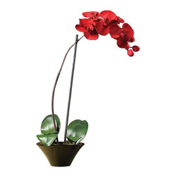 Holiday Phalaenopsis Orchid Arrangement - This gorgeous deep holiday red Phalaenopsis orchid is one of a kind. Large orchid blooms, realistic buds and green leaves bring this piece to life. At 20 inches tall and set in a stylish black ceramic dish this piece is sure to set your holiday season on fire! Height= 20 in x Width= 9.5 in x Depth= 7 in