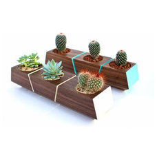 Modern Indoor Pots And Planters by Revolution Design House