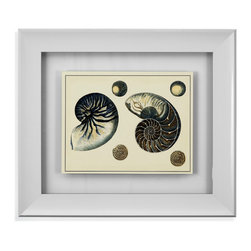 Bassett Mirror - Bassett Mirror Framed Under Glass Art, Antiuque Blue Nautilus - Bring the beach back home with you with this beautiful antique blue print of a Nautilus shell beneath glass in a simple bevel-edged white frame. Its surrounding white matte and frame make the colors in the print itself really stand out, make it sure to garner many compliments in a beautiful beach-style cottage or room. Keep it on its own, or hang it along with the other Antique Blue prints in the series.